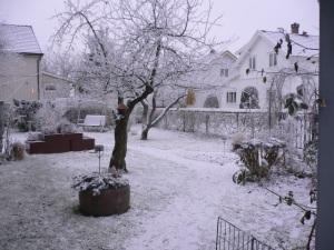 Hagen min dekket av rimfrost.