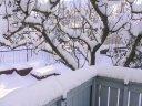 Hagen sett fra verandaen mot sør